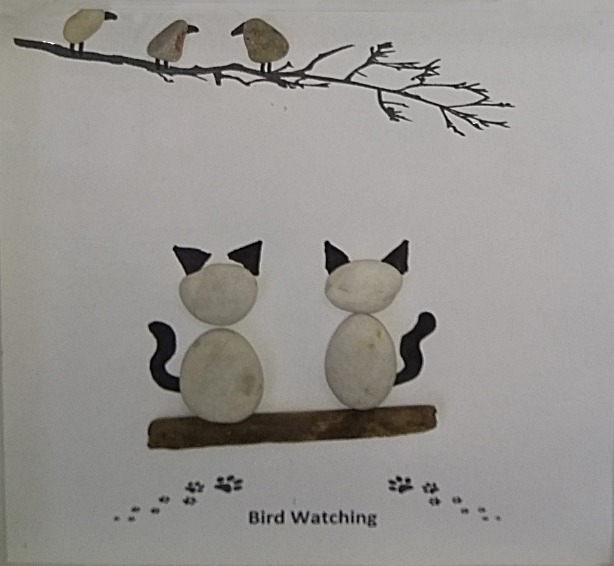 Jackie Colclough - Bird Watching