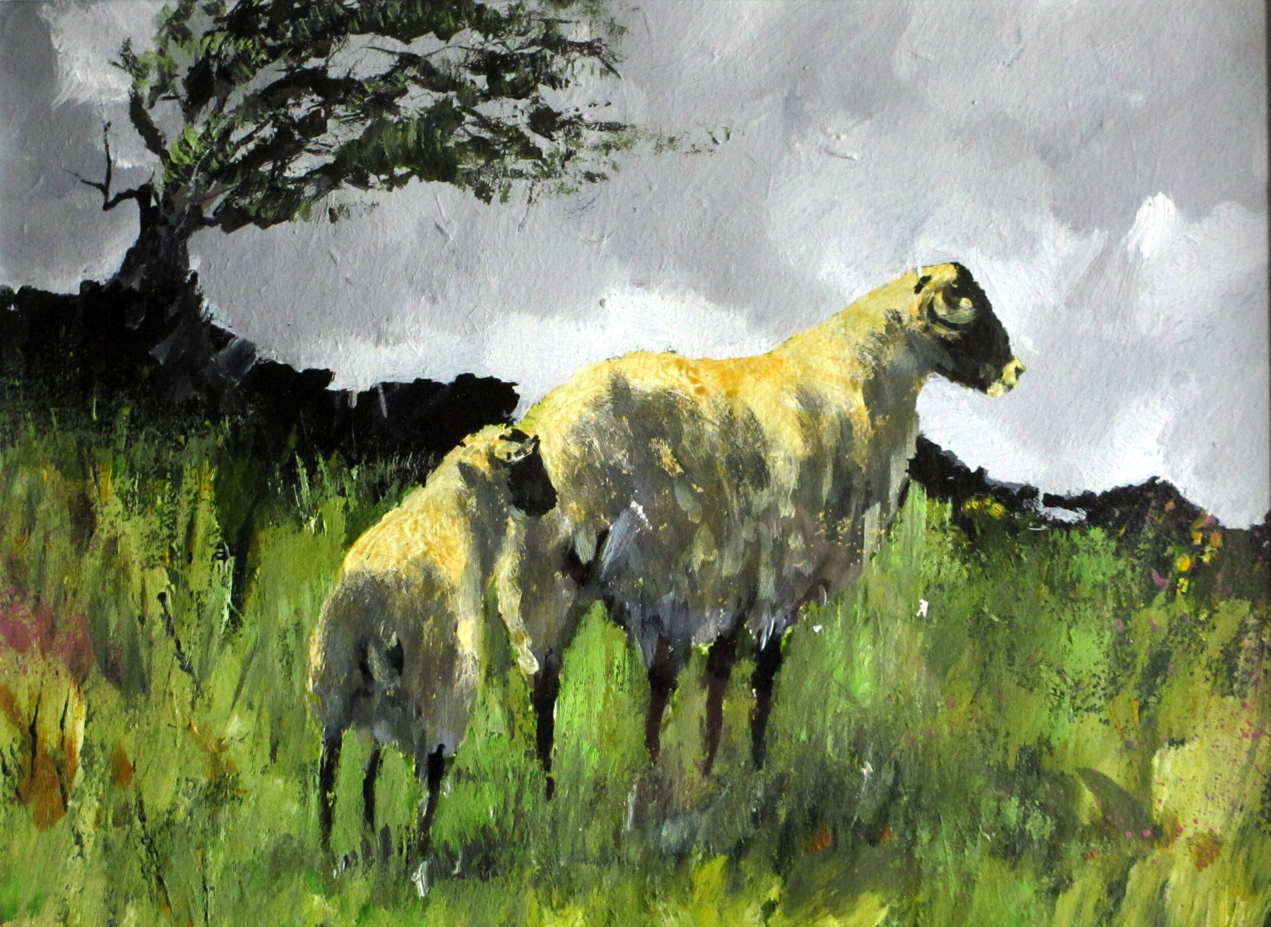 DaRTMOOR SHEEP.JPG