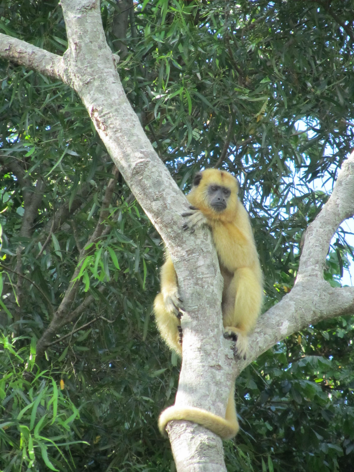 argentina_monkey.jpg