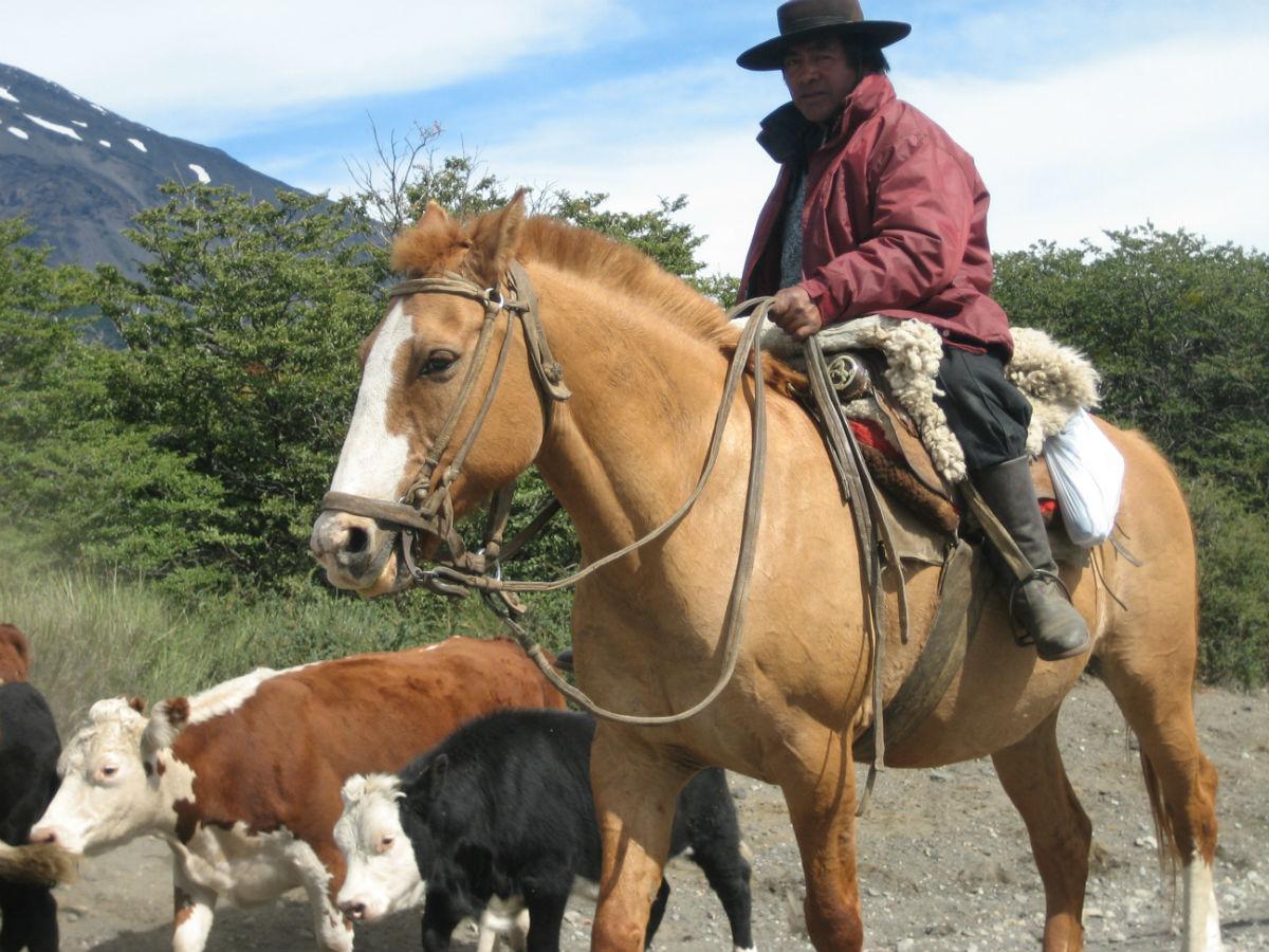 gaucho_horse.jpg