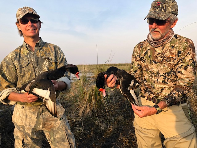 """The variety of ducks is fantastic ranging from various teals and smaller ducks to fulvas ducks and these """"crestones"""" or rosy-billed pochards."""