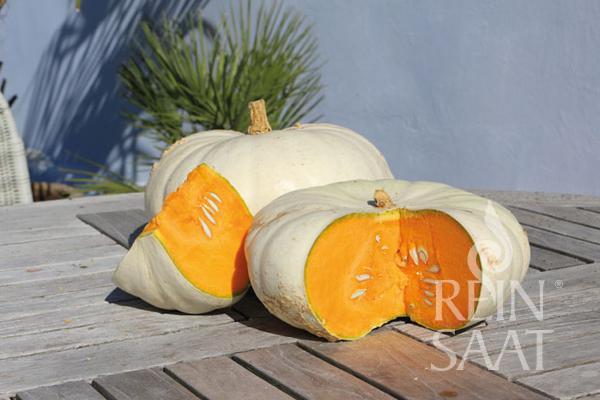 Flat White Boer pumpkin. South African heirloom.