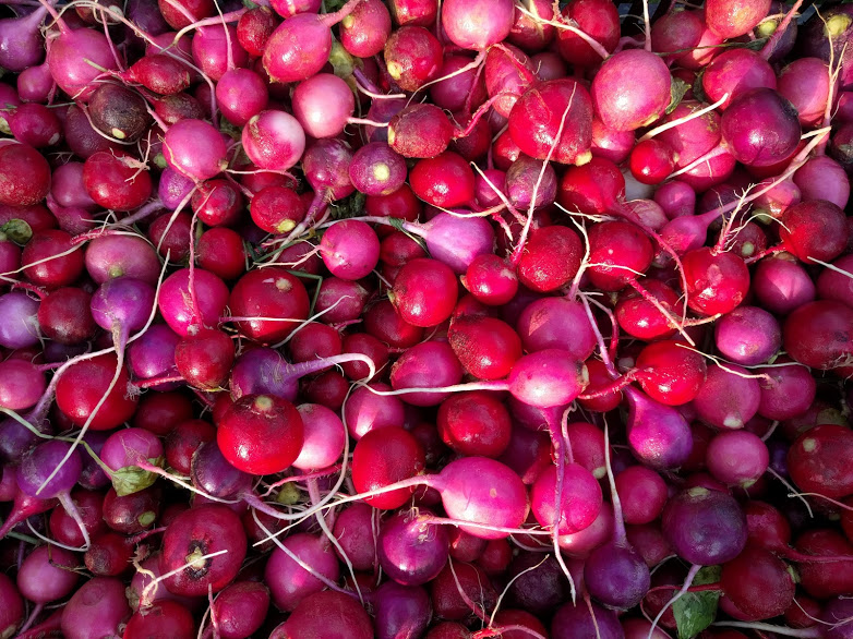 Radishes, as brightly colored as they are flavorful!