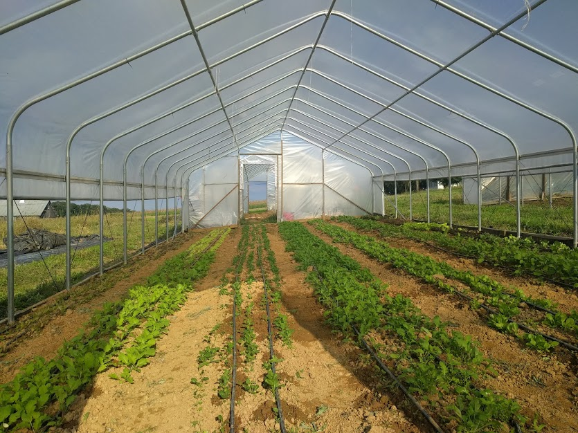 The upside of the extra wet weather is that we've got our hoop houses in excellent shape.