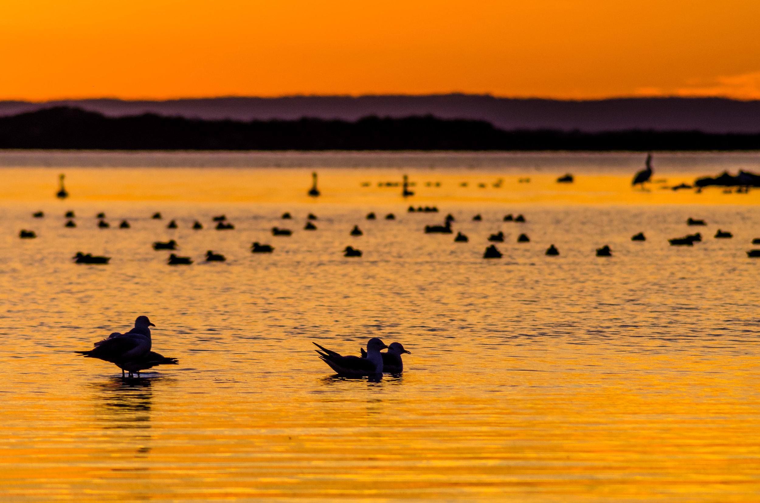 Birds on dusk.jpg