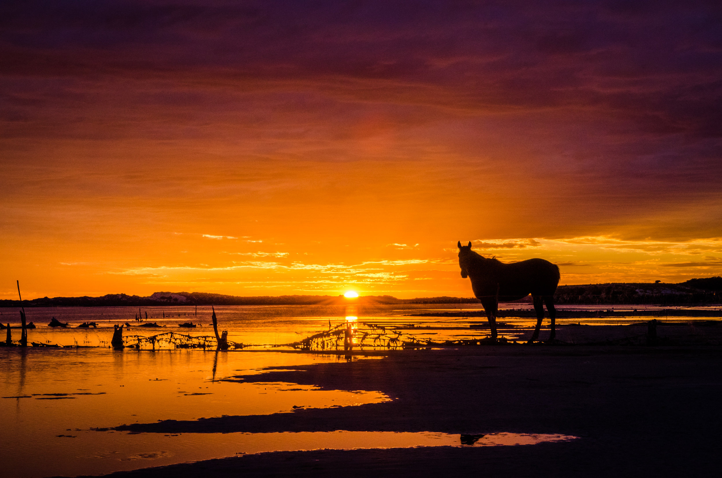 Horse on the Coorong.jpg