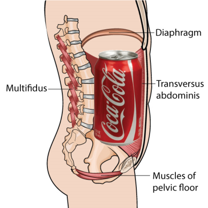coke and diaphram.png