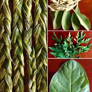 4 Sacred Plants.JPG