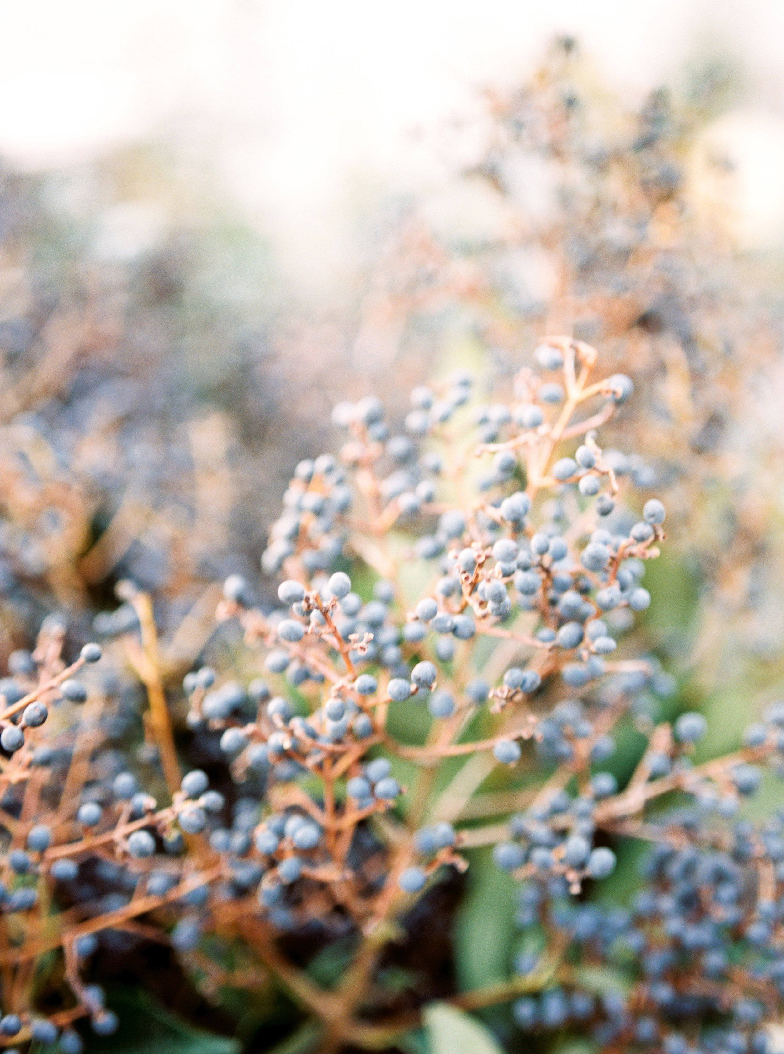 Rachel-Carter-Photography-Denver-Colorado-Film-Florist-Photographer-7.jpg