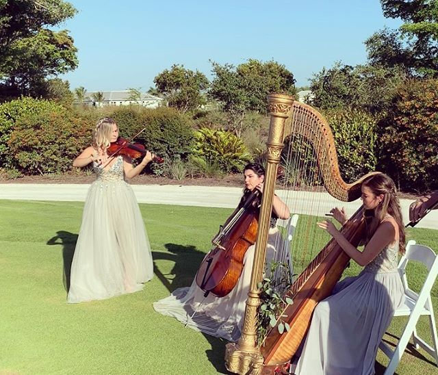 Violin + cello + harp 😍
