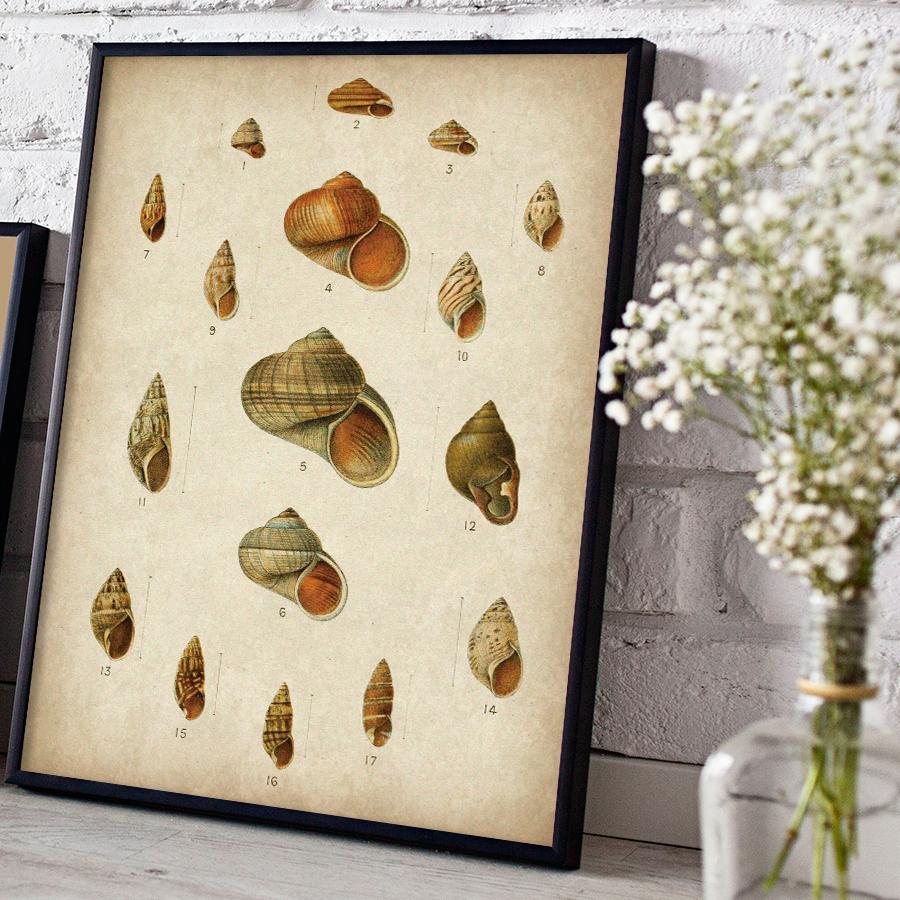 Vintage Shells Digital Print - Free Download  HERE