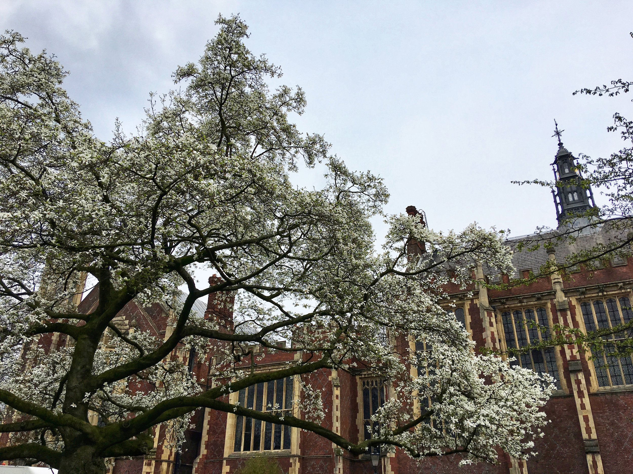 Blossoms at Lincoln Inn Fields