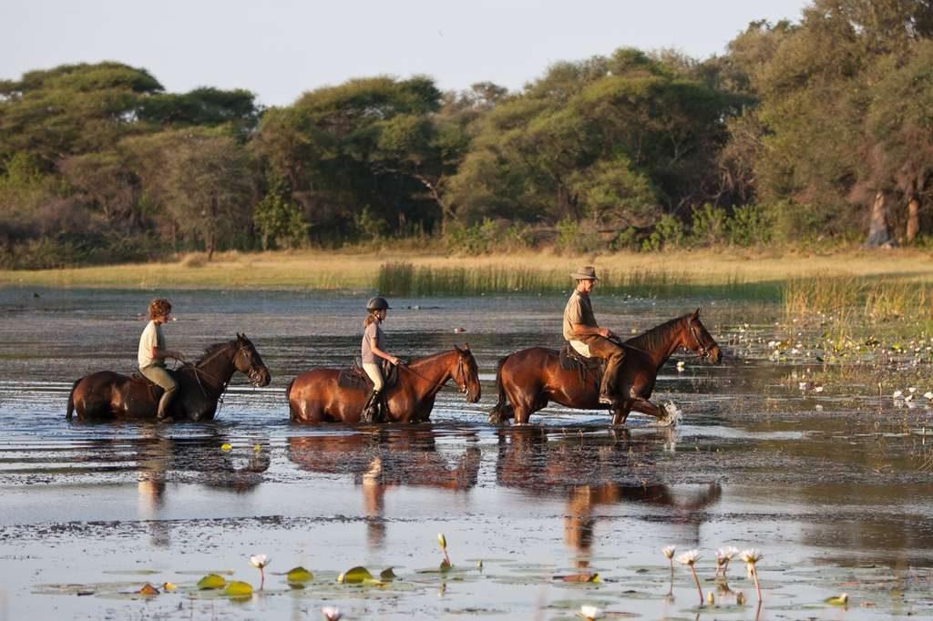 Sublim hestesafariBotswana -