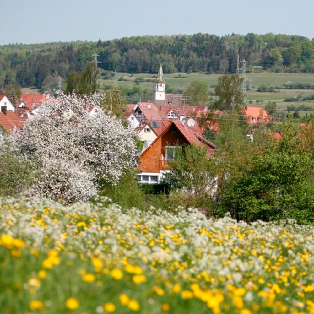 Blumenwiese Gomadingen