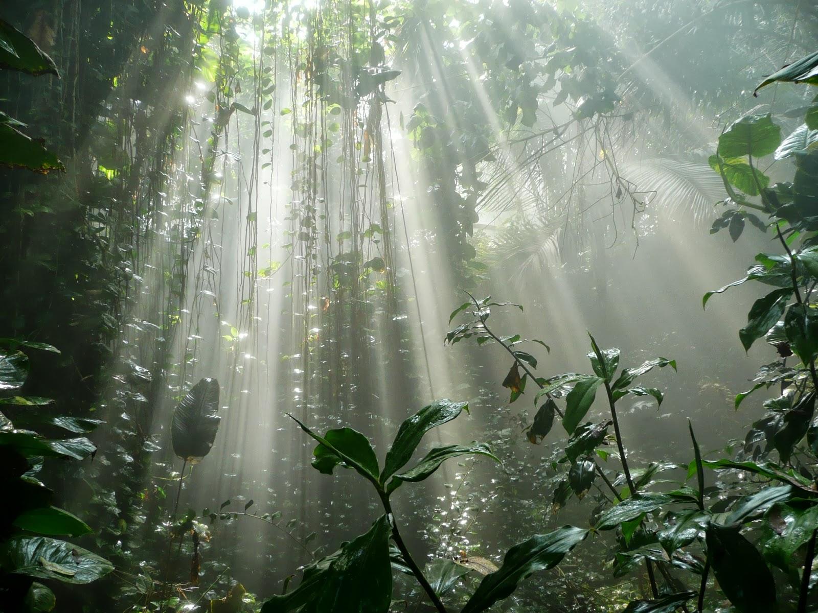 rainforest 3.JPG