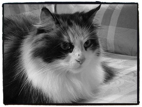 Beautiful Delilah, 3/23/2006 — 1/25/2018