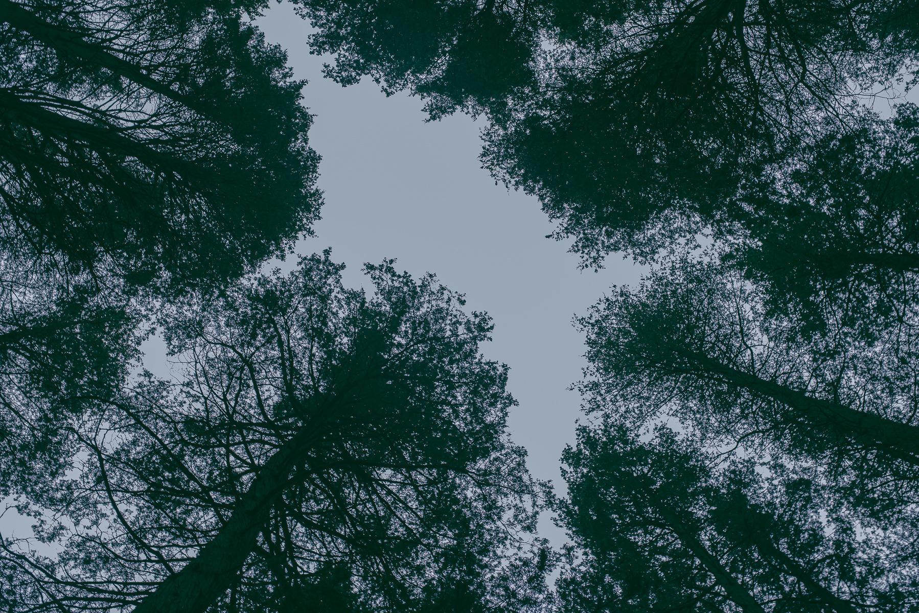 endofyear_15-10.jpg