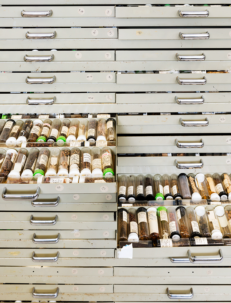 Antique Seed Collection, Western Australia Threatened Flora Seed Centre Kensington, Western Australia