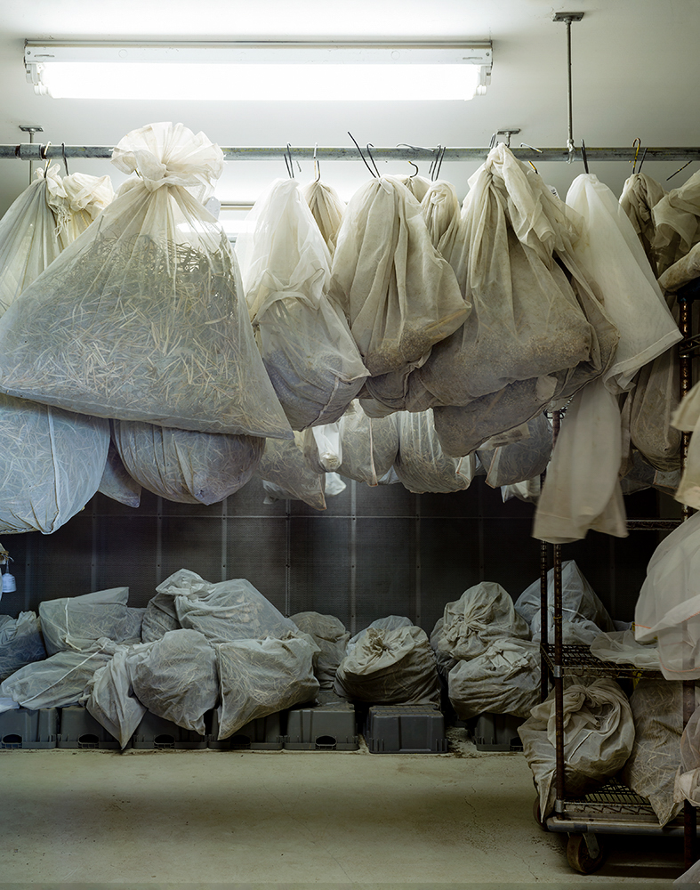 Collection Drying, USADA ARS Plant Genetic Resources Unit    Geneva, New York, USA