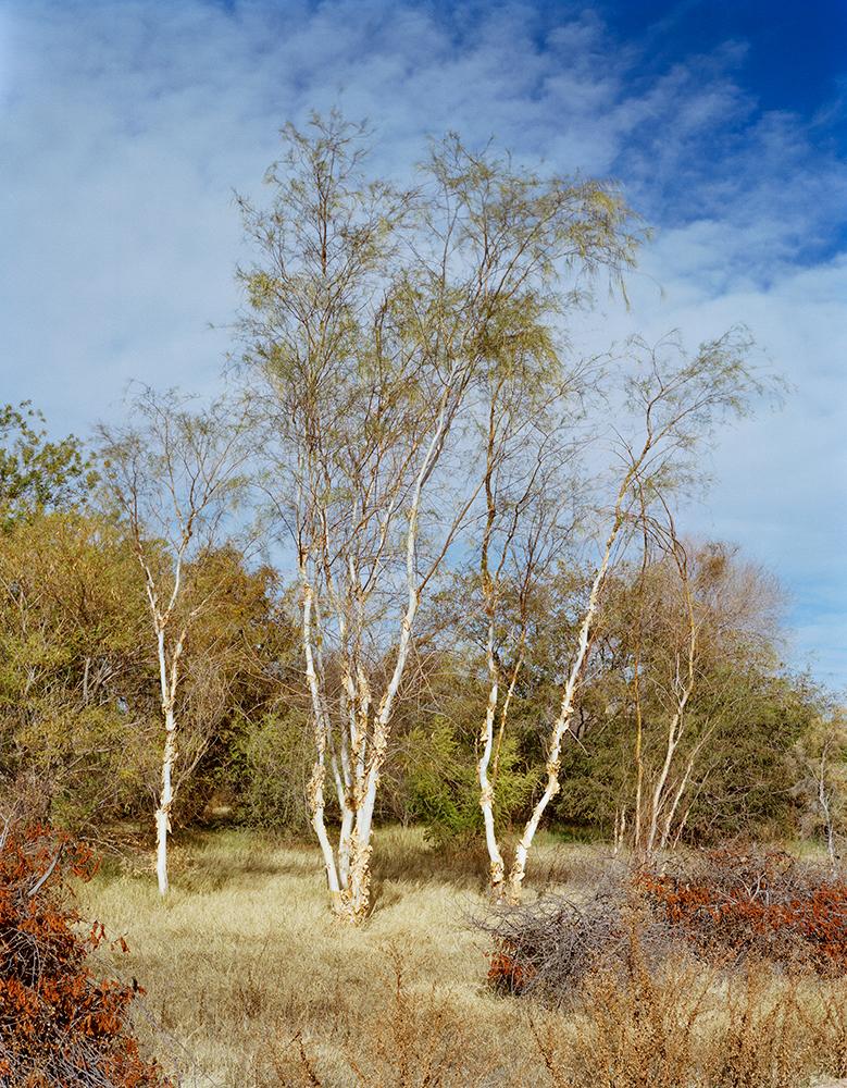 Hyper-Arid Research, Desert Legume Program    Yuma, Arizona, USA