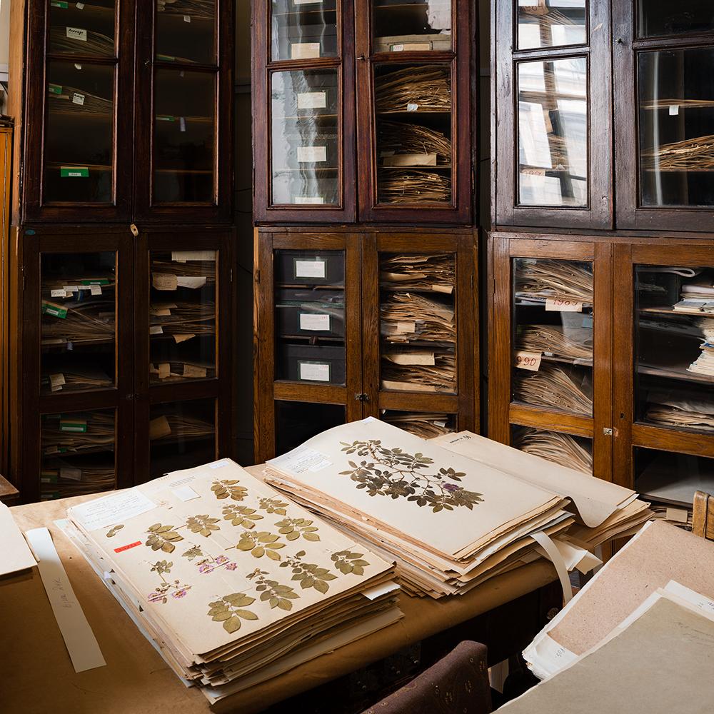 Herbarium, N. I. Vavilov Research Institute of Plant Industry    St. Petersburg, Russia