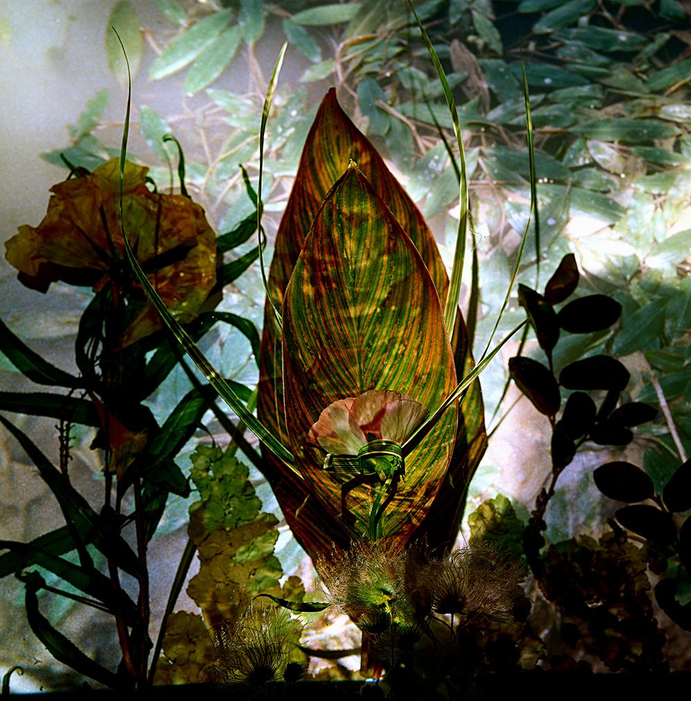 Mantis   44 x 44 inches