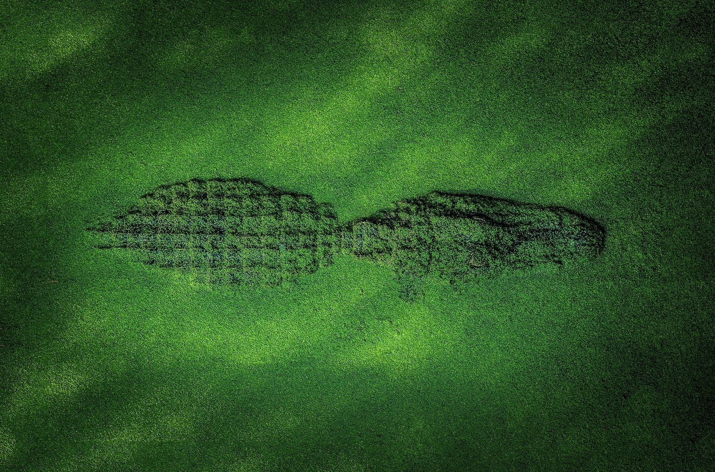 VGT logo: crocodile lurking in duckweed water, hidden wild energies waiting to emerge.