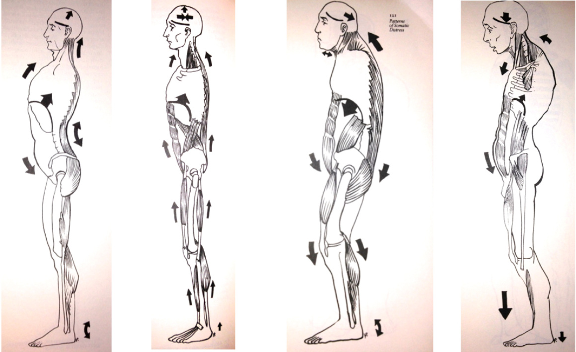 Image from Keleman's Emotional Anatomy.