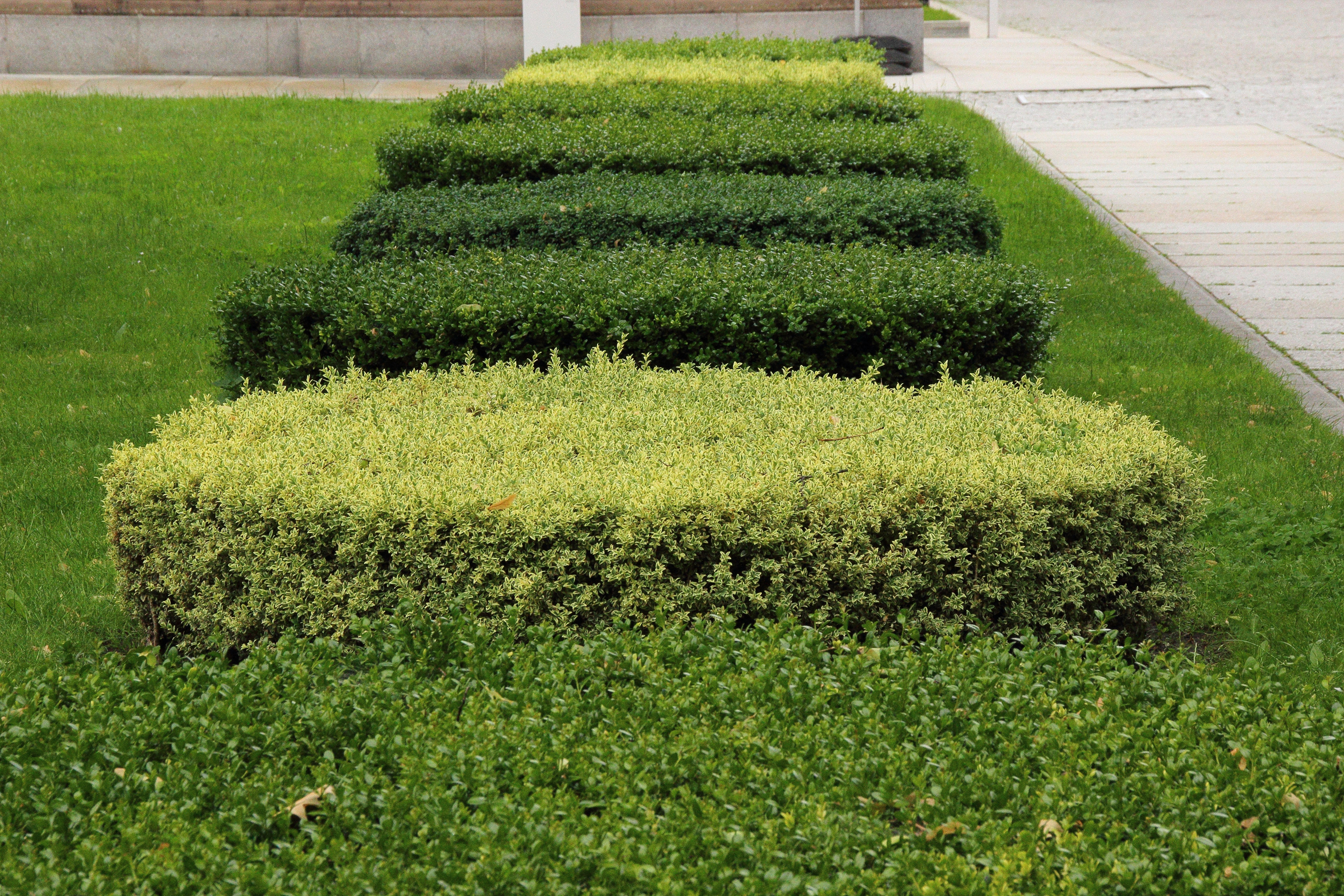 Hedge Cutting - We offer a hedge cutting service whether it's one large shrub or a tall hedge. We can prune your Pittosporum, trim your Taxus baccata or even re‐shape your Rhododendron.