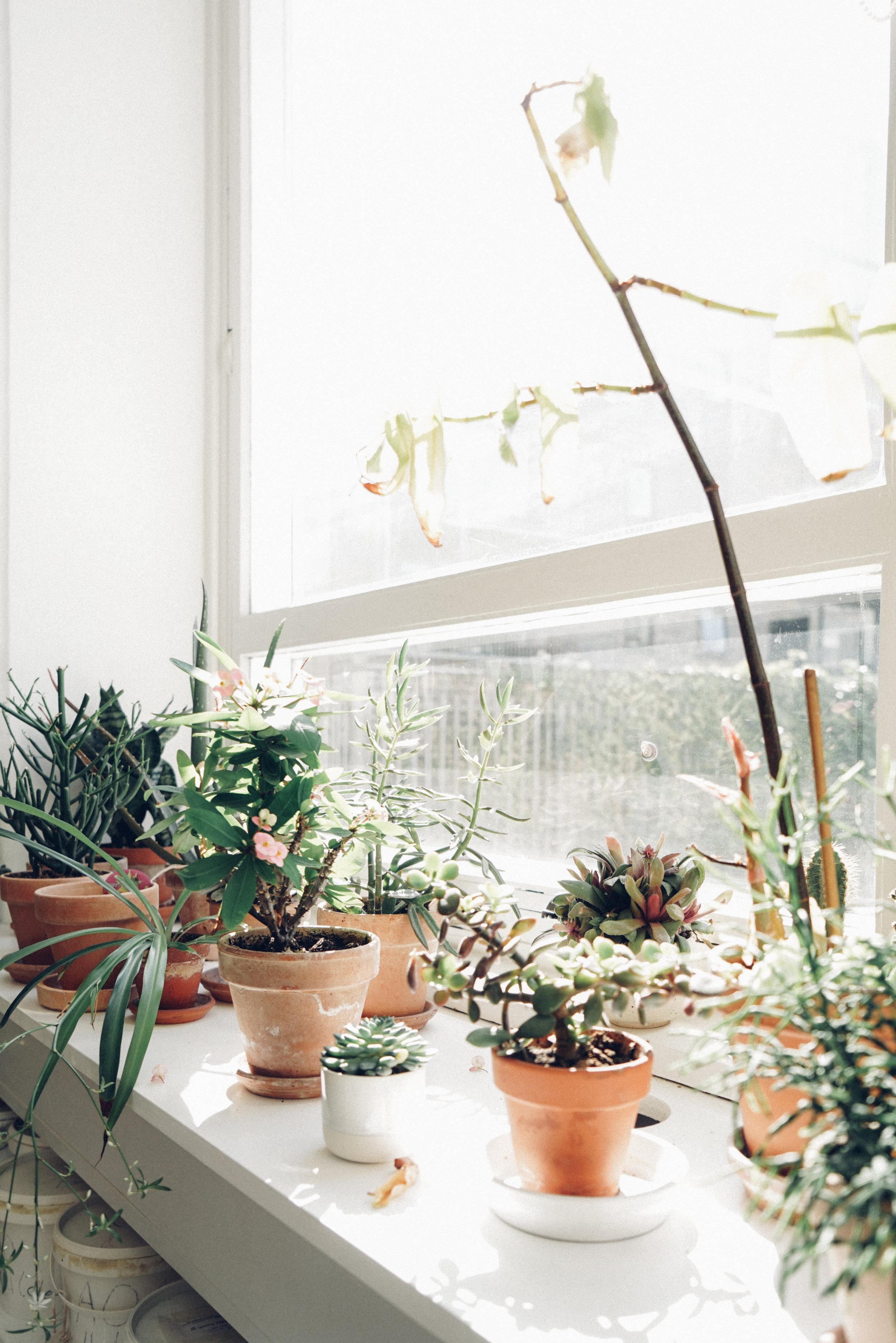 Studio Arhoj plants