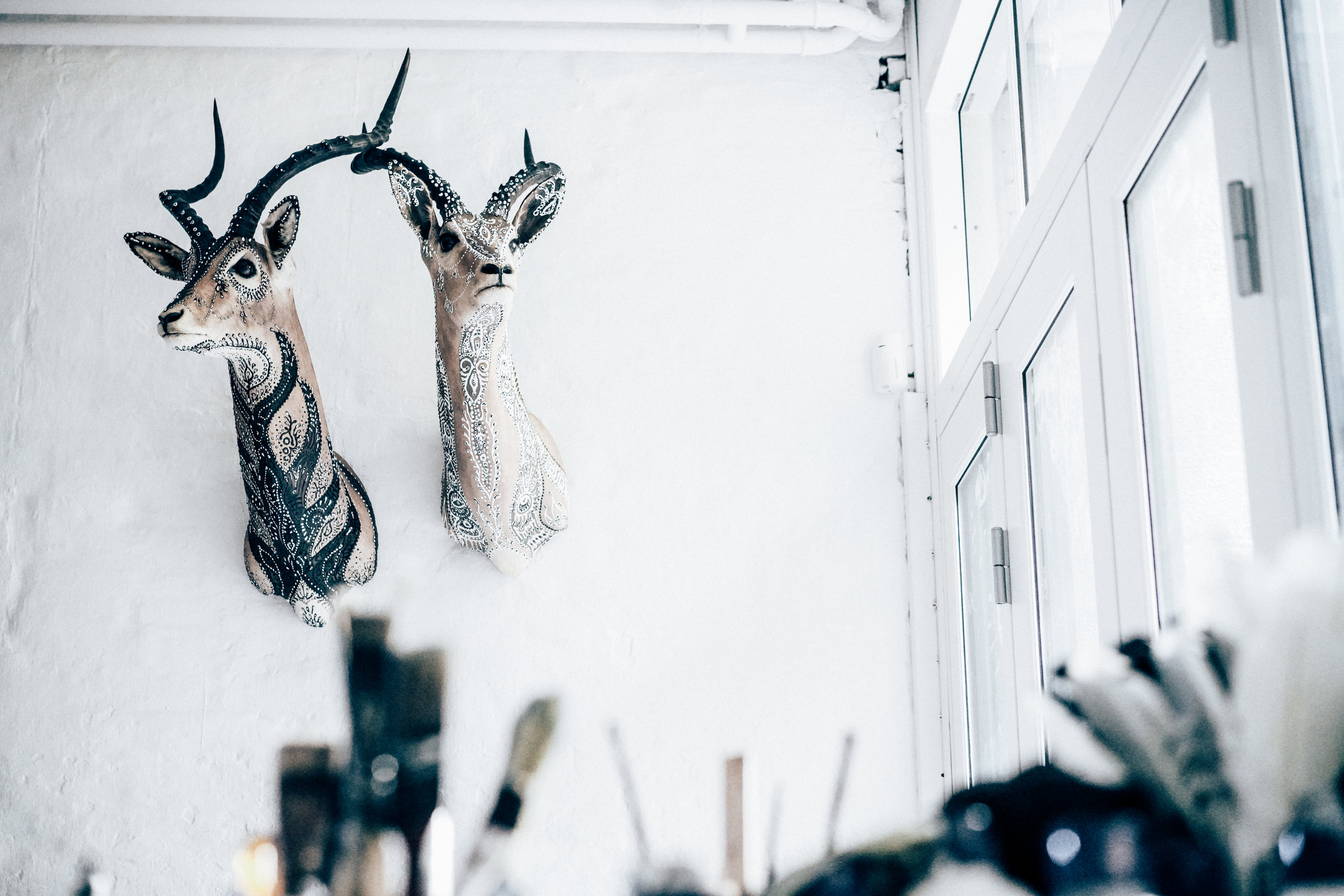 Morten Angelo taxidermy