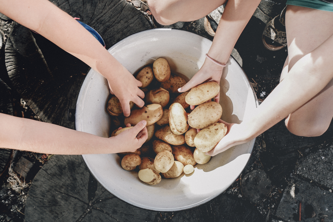 Students collectin potatoes