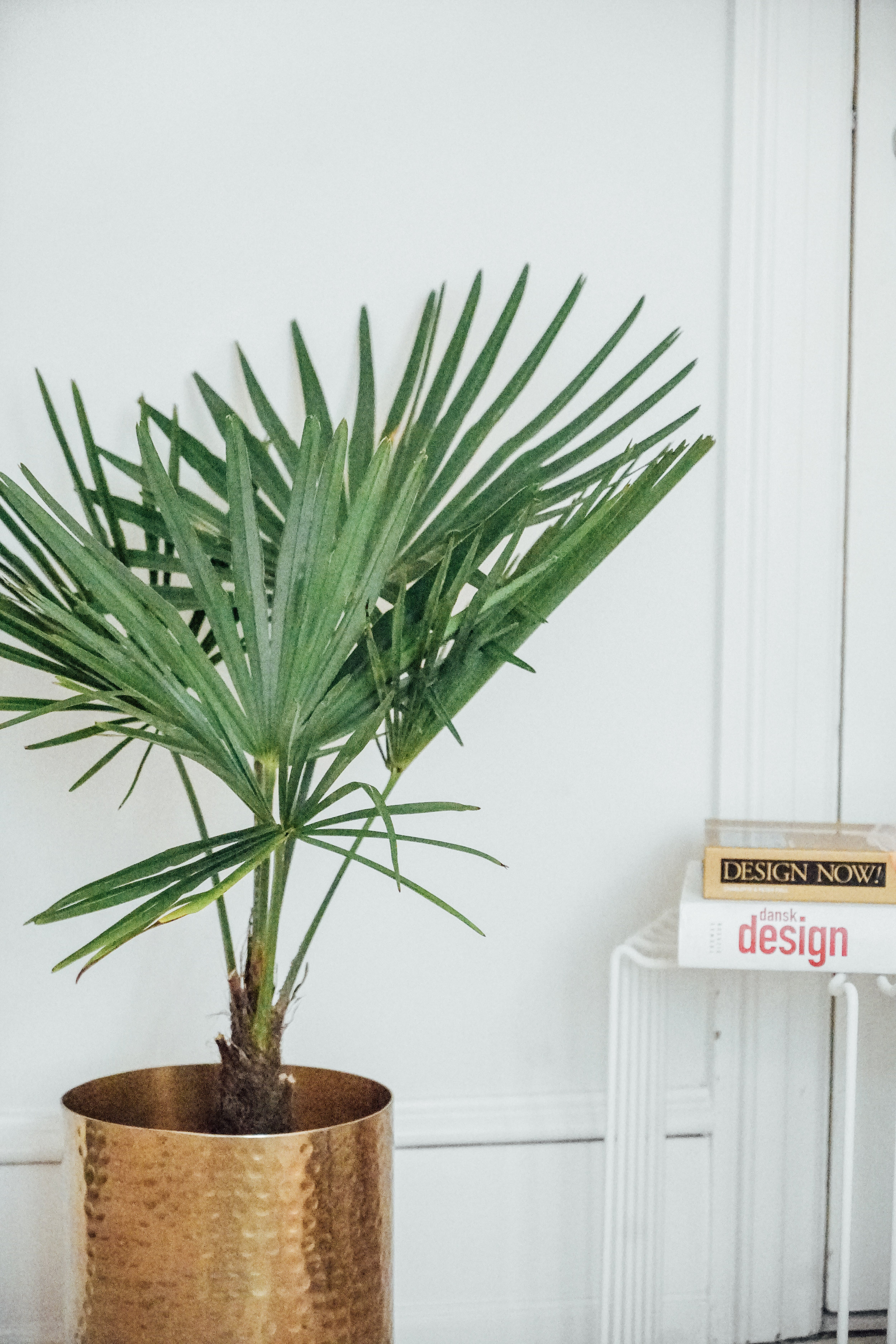 Plants at Alexandra Raben studio