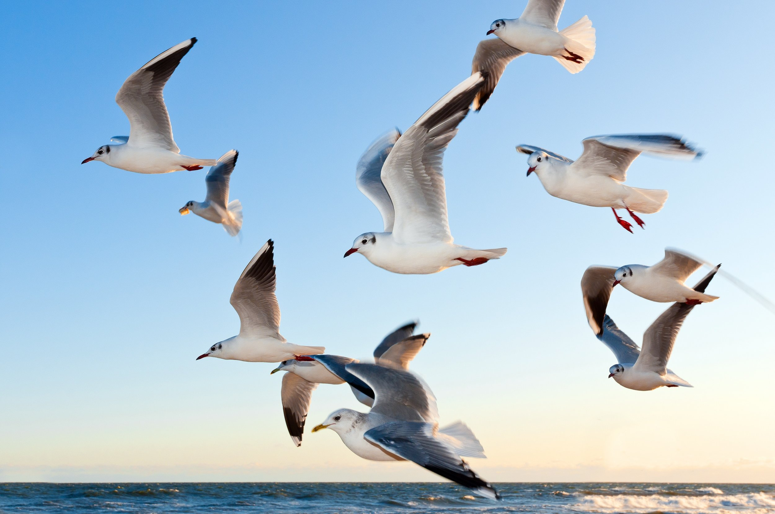 animals-birds-flying-54462.jpg