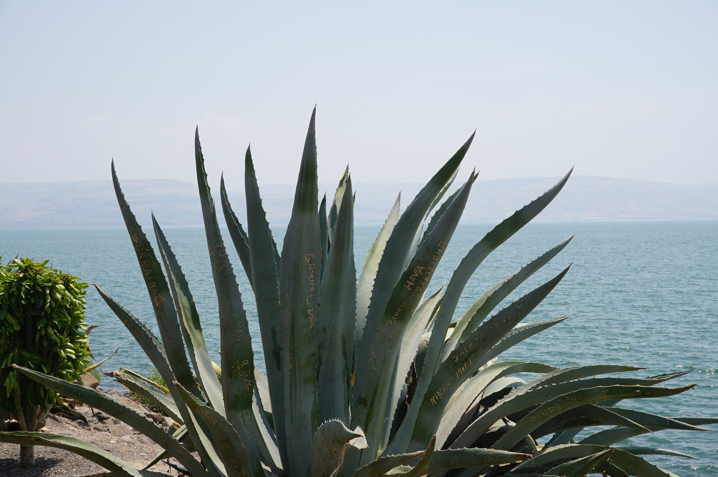 Capernaum-Sea of Galilee Israel 1.JPG