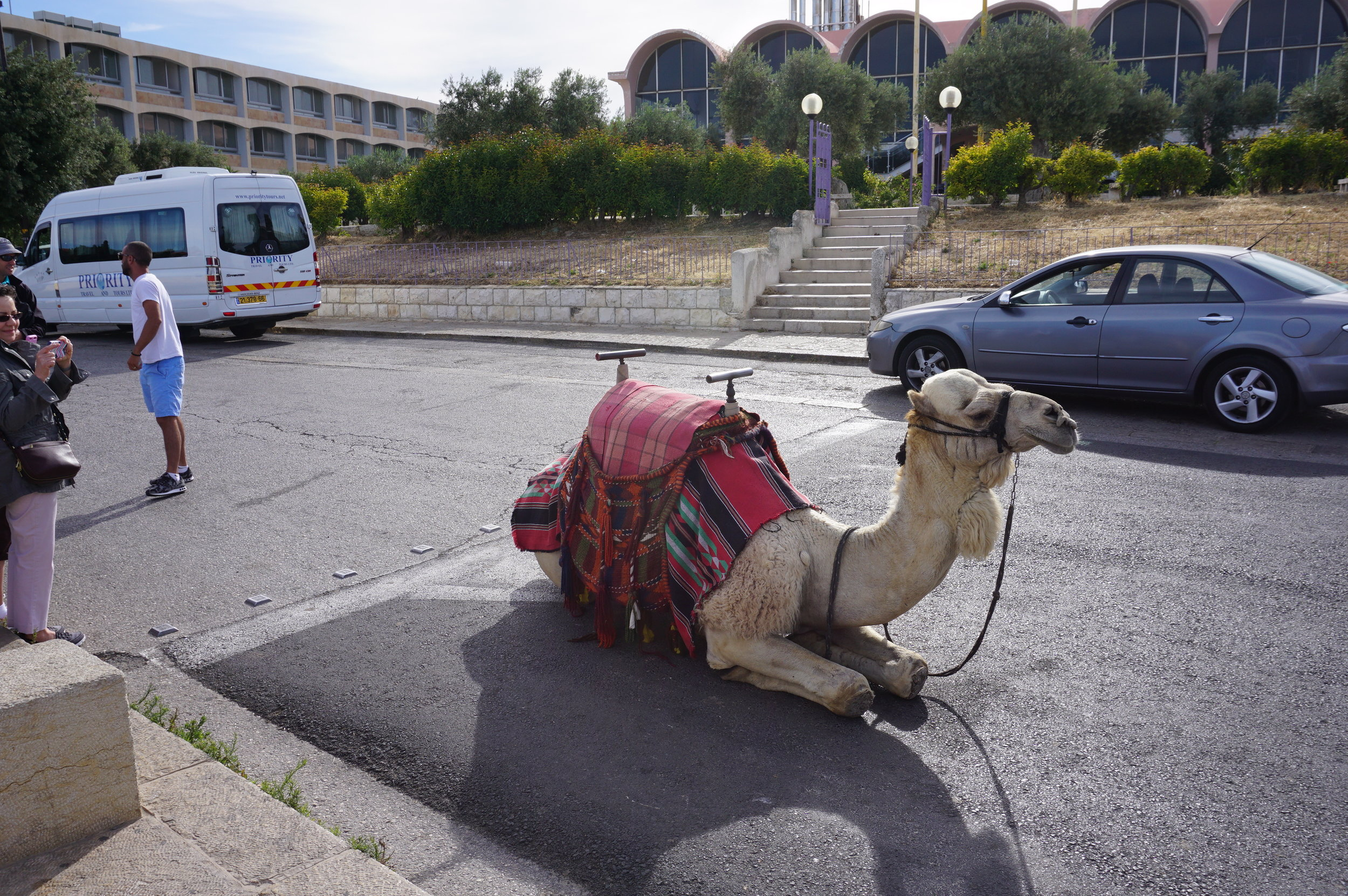 Camel at Mount of Olives Jerusalem Israel.JPG