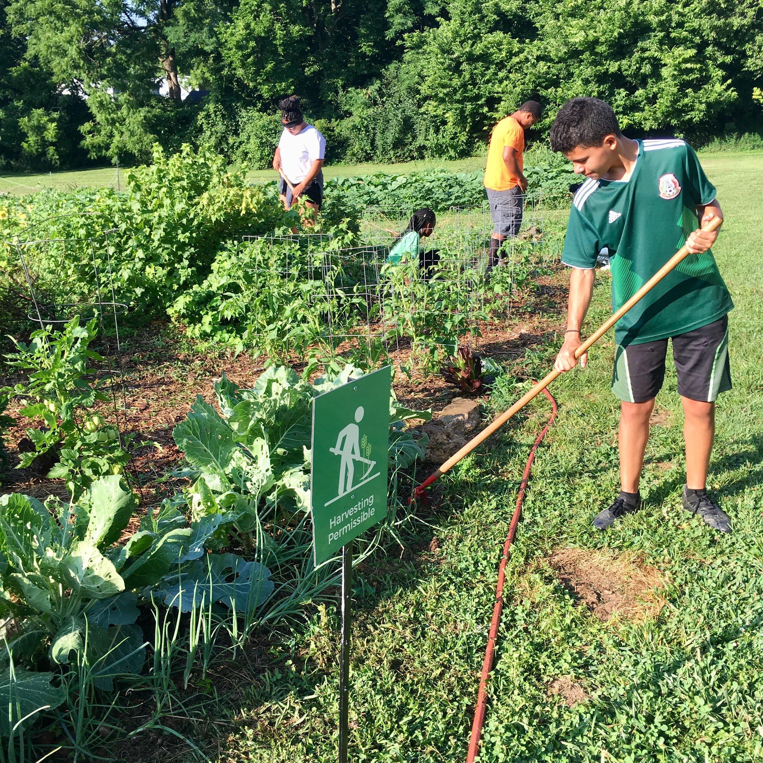 Derek and a few of our SEEDS participants are seen here weeding the u-pick plot at the Seedleaf Community Farm. Our youth have been busy four mornings each week caring for three gardens, two food forests, and cooking some freshly harvested items as well!