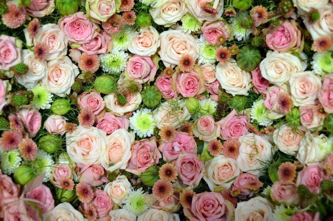 blutenmeer-pink-rose-romantic-158697.jpg