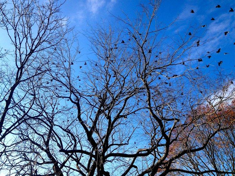 deb-walsh-blog-q-cards-birds-branches.jpg