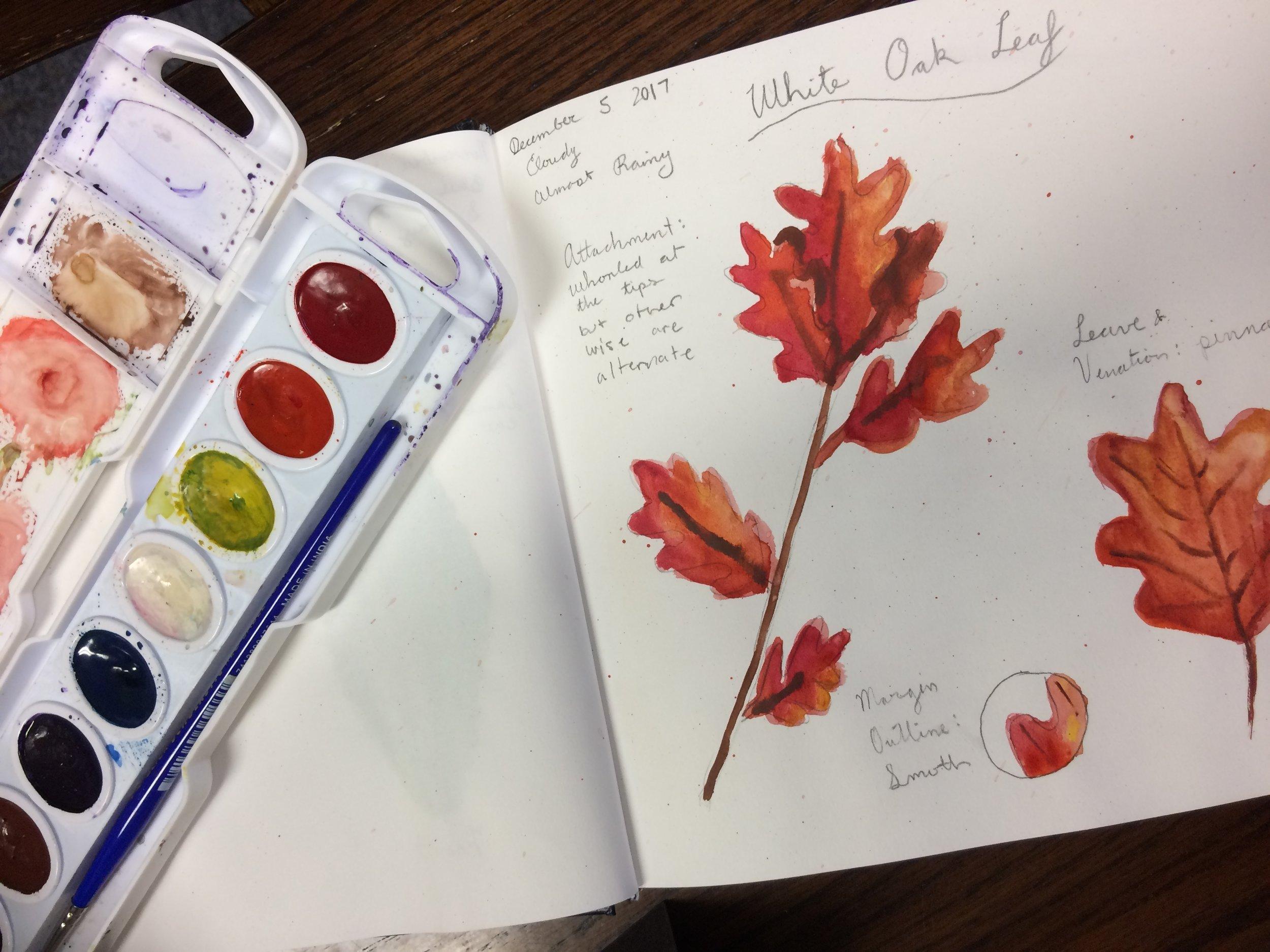 NS Paint White oak.JPG