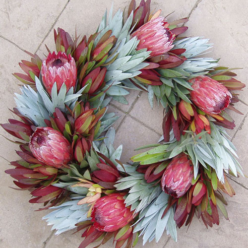 Ice Protea Wreath available from sale from  Wild Ridge Organics