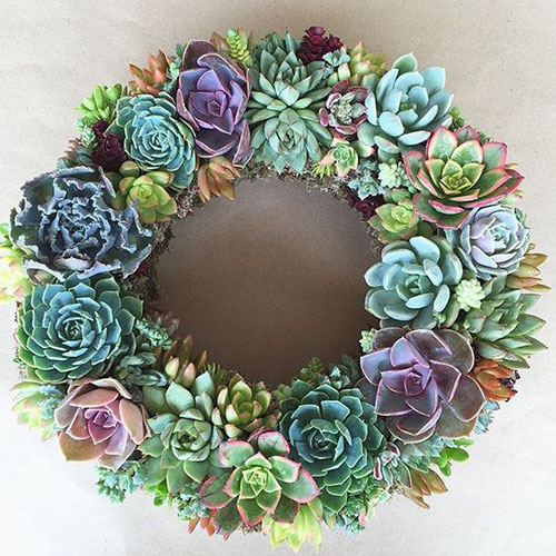 Succulent Wreath inspiration from  Succulents are for Sharing