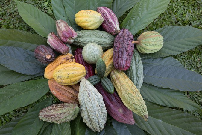 26SCI-CACAO6-master675.jpg