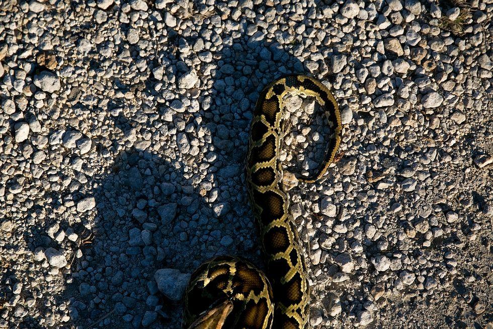 1458338094-esq-python-027.jpg