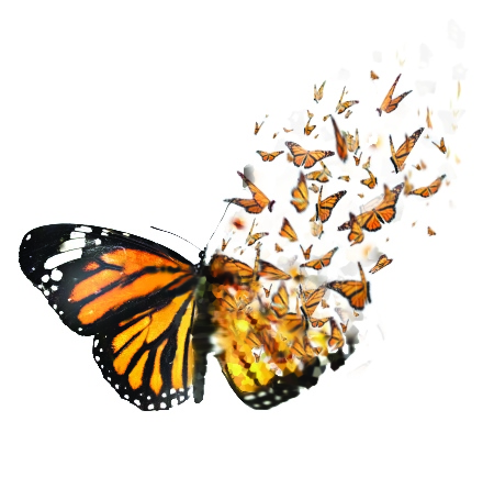 butterflies-breaking-out-cleaner-copy-2.jpg