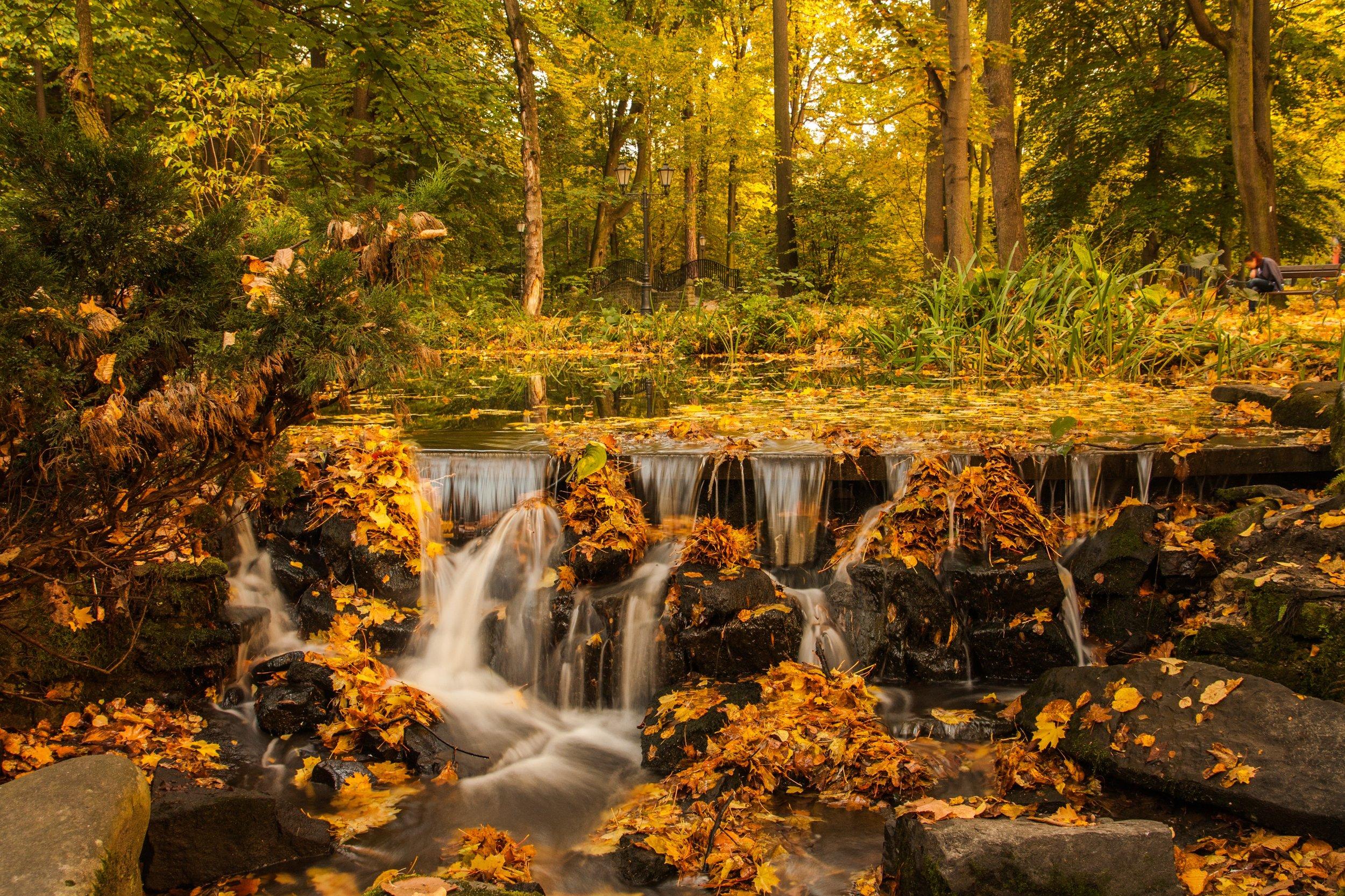 Fall forest sunset  Photo credit:  Dawid Zawiła  via Unsplash