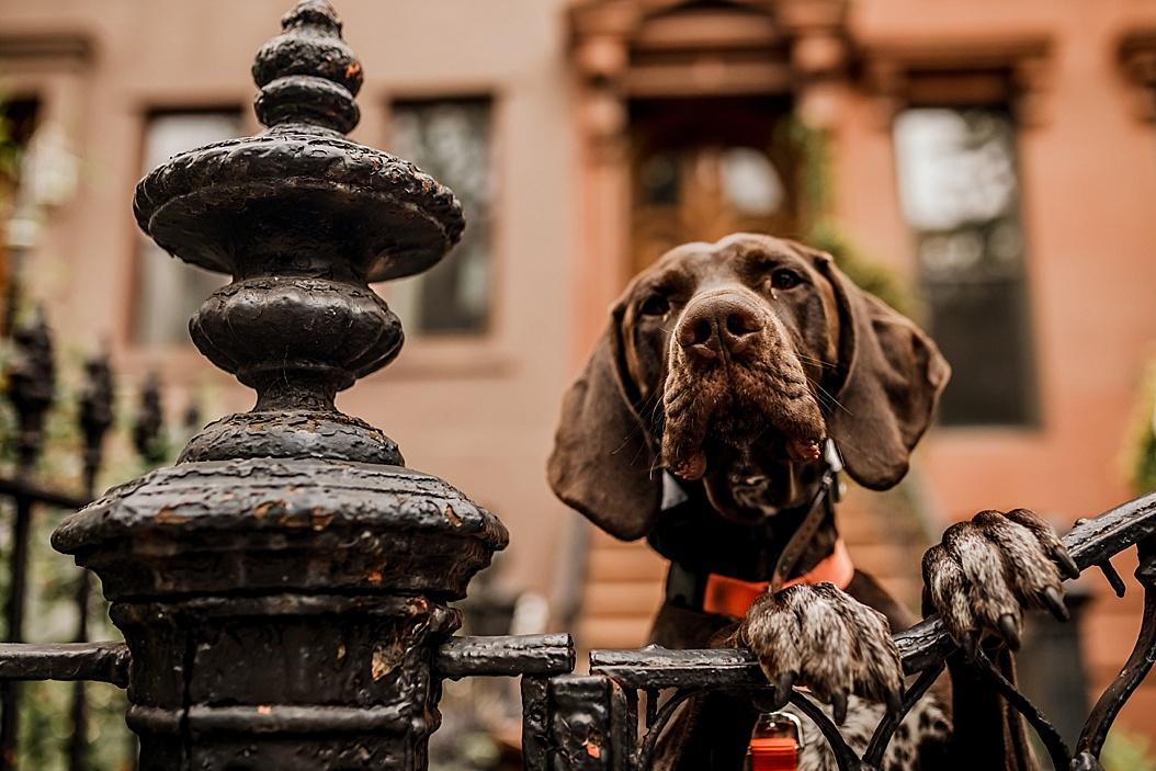 Brooklyn-Photographer_0005.jpg