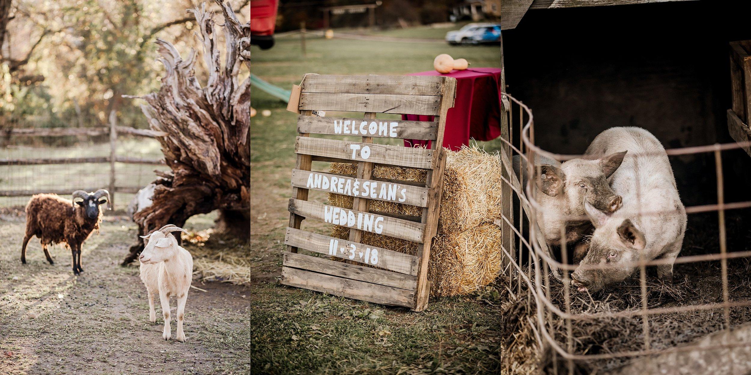 Savidge-Farms-Wedding-Photographer_0106.jpg