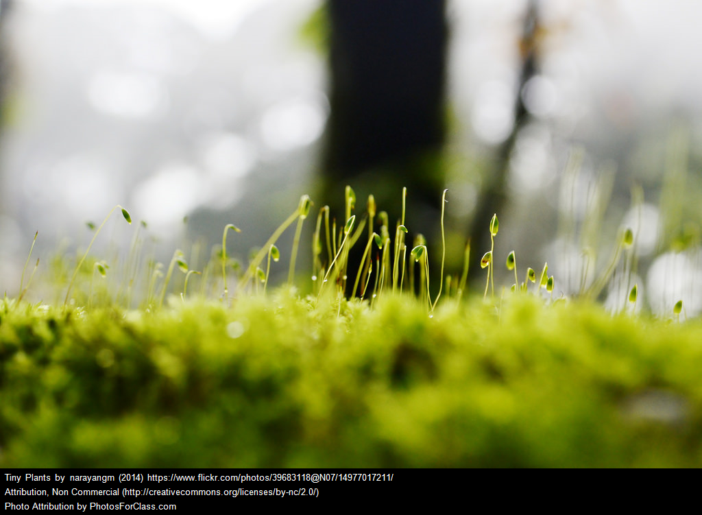 [Image: Tiny plants grow upward from a blurry green base.] Photo by karandaev/iStock / Getty Images