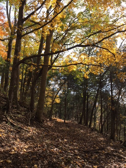 A woodland path with yellowed leaves above and underfoot at the Owl Hill Sanctuary.
